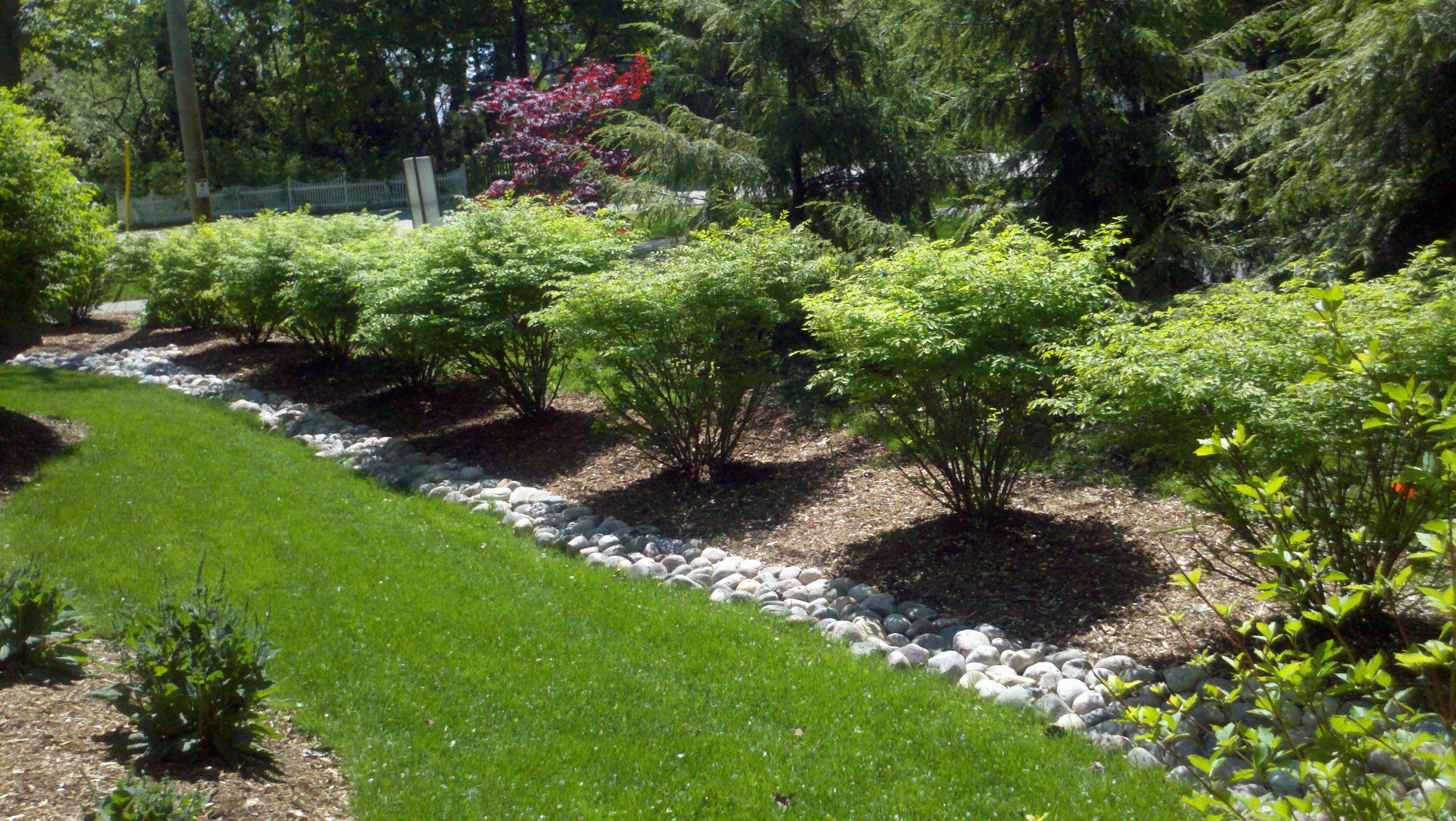 какие деревья посадить в огороде