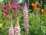 Растения для сада фото и названия – Обзор самых неприхотливых долгоцветущих многолетников для дачи и сада с фото