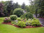 Какие кустарники можно посадить возле дома – 5 Декоративных Кустарников, Которые Стоит Посадить В Саду!
